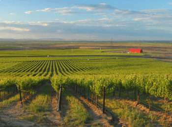 Alexandria Nicole Cellars offers a scenic setting for wine tasting in the Willamette Valley.
