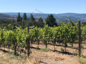 Syncline's vineyards in Lyle