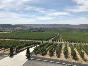 Vineyards views from Col Solare on a Washington wine country escape